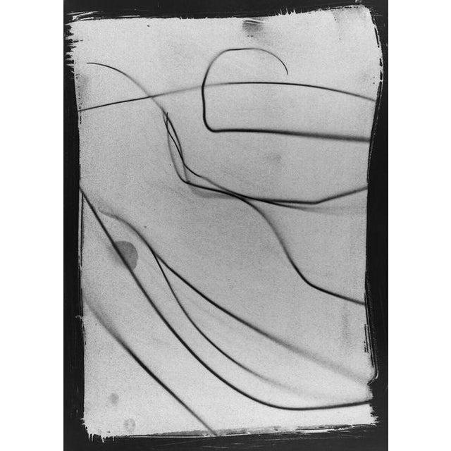 """Botanical Light Drawing 3,"" Rinne Allen - Image 1 of 2"
