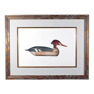 Arthur Nevin Print of a Red-Breasted Merganser Duck Decoy, Beach Haven, NJ
