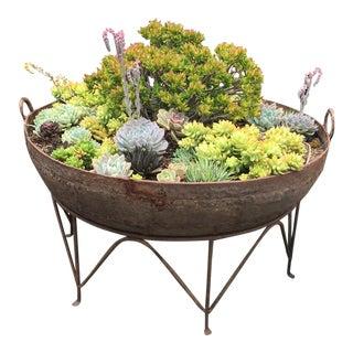 Iron Kadai Bowl With Succulents