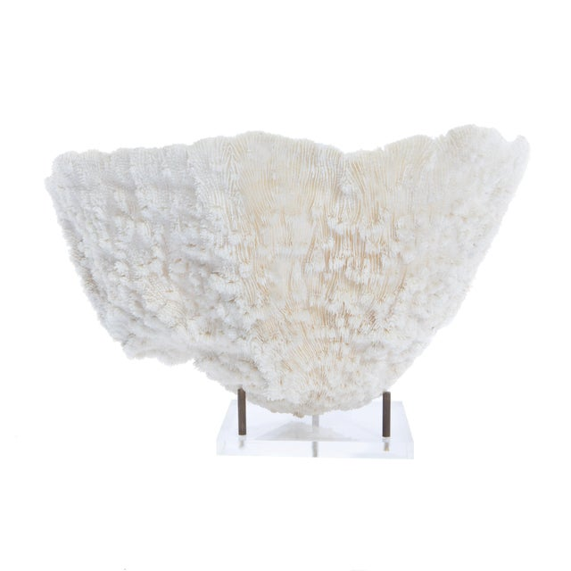 Image of LARGE BOWL-SHAPED CORAL SPECIMEN ON STAND