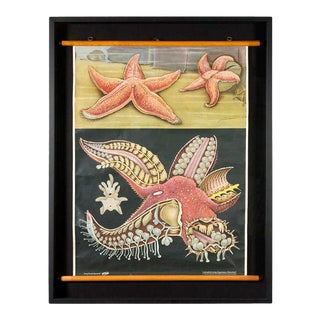 Framed Starfish Teaching Scroll
