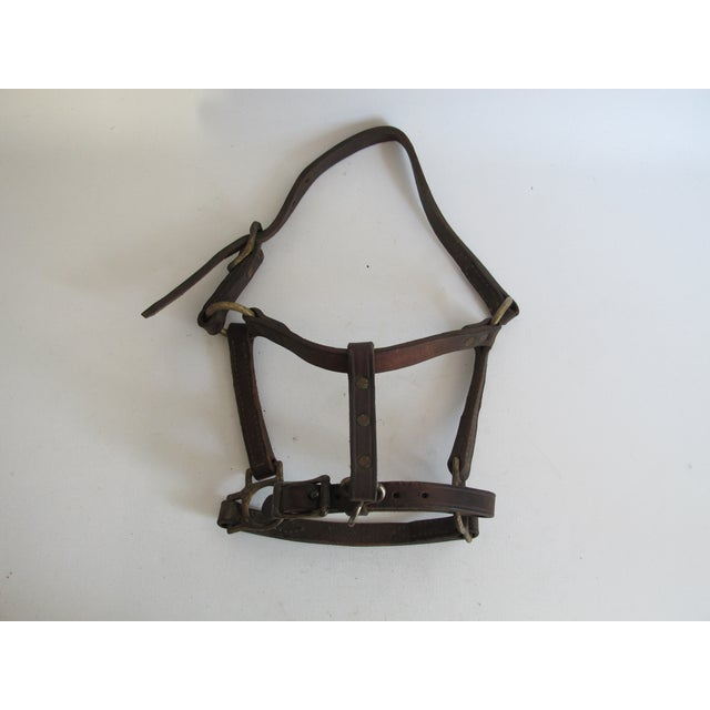 British Leather & Brass Pony Halter - Image 2 of 6