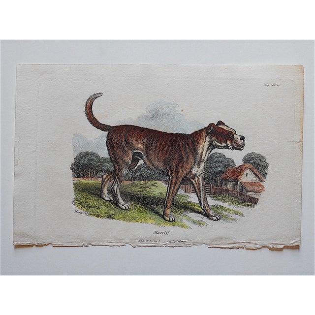 Antique English Mastiff Engraving - Image 2 of 3