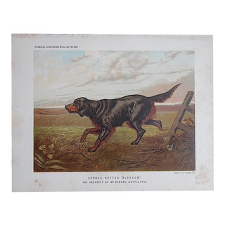 "Antique Dog Lithograph ""Gordon Setter"""