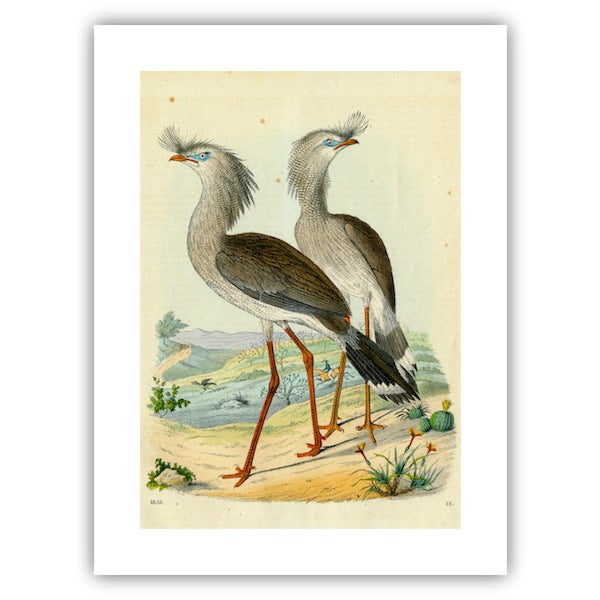 Image of Antique '2 Silly Cranes' Archival Print