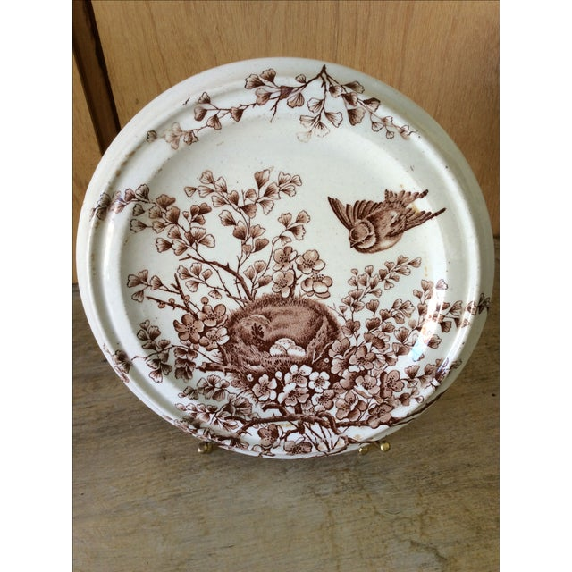 Image of Shabby Chic Brown & White Birds Nest Cookie Plate