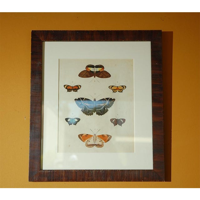 Antique Butterfly Prints Set of Eight - Image 8 of 10