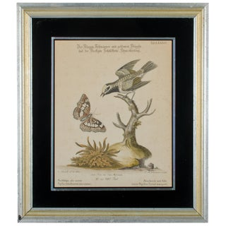 """C.1768 George Edwards """"Flycatcher & Golden Winged Butterfly"""" Engraving"""