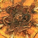Image of Impasto Sun Painting