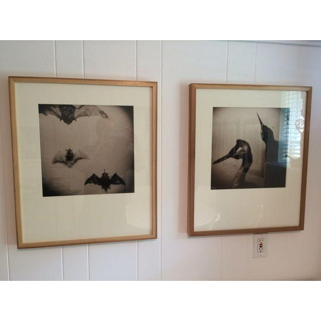 "Image of ""Holga Birds"" Photograph by Jason Thrasher"