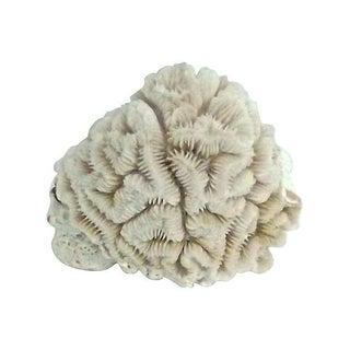 Small Brain Coral Specimen