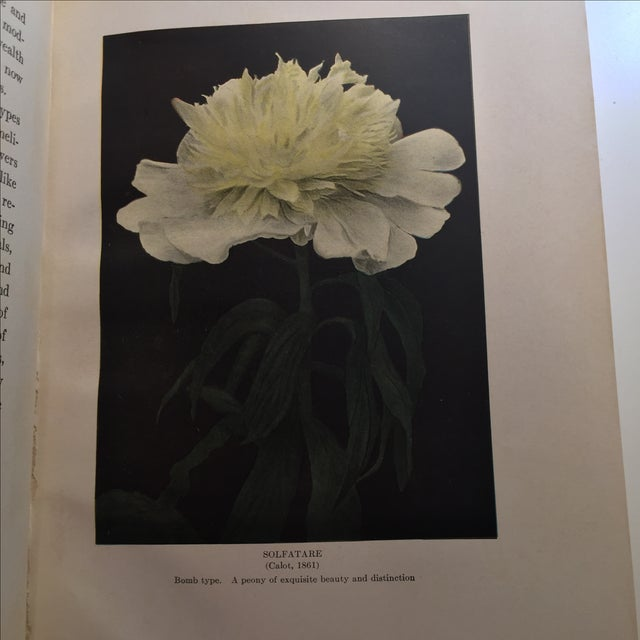 """The Book of the Peony"" by Harding, 1917 - Image 6 of 11"
