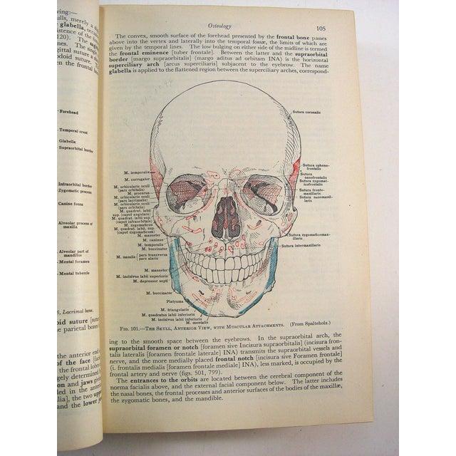 Human Anatomy Book, 1947 - Image 5 of 10