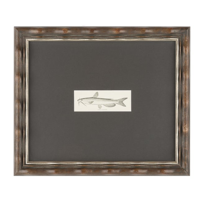 Framed Fish Prints- A Pair - Image 3 of 3