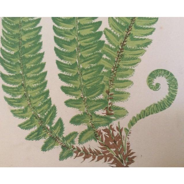Framed English Fern Print - Image 5 of 8