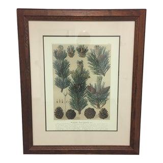 Henredon German Pines Giclee Print