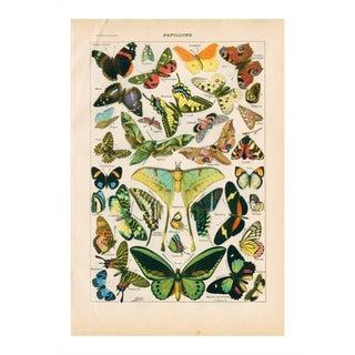 Vintage Butterflies Archival Print