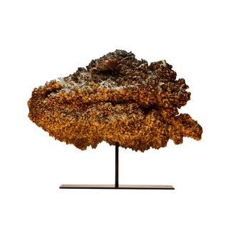 Large burl root specimen on stand