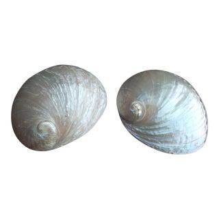 Natural Iridescent Abalone Seashells - A Pair