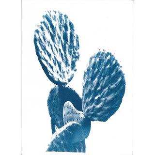 Succulent Cactus Cyanotype Print