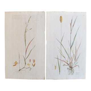 1700's Antique Botanical Plant Prints - A Pair