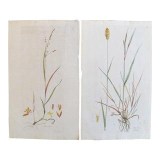 1700's Antique Botanical Plant Prints - A Pair
