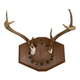 Leather Mounted Deer Antlers