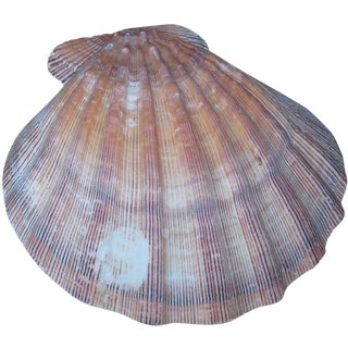 Decorative Sea Shell