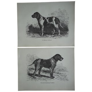 Antique Hunting Dog Engravings - A Pair