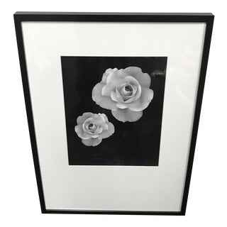 Framed Photograph of Two Roses in Bloom