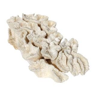 Antique Coral Piece