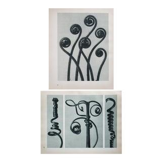 Karl Blossfeldt Two-Sided Photogravure N47-48