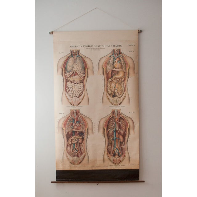 Image of Large Vintage Pull Down Anatomy Chart
