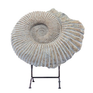 LARGE AMMONITE FOSSIL ON STAND