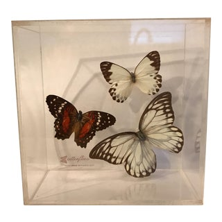 Vintage Butterfly Specimen in Lucite Display Case