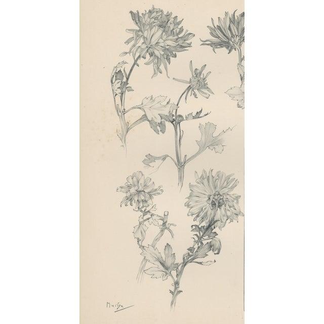 1904 Art Nouveau Botanical Drawing by Mucha - Image 2 of 4