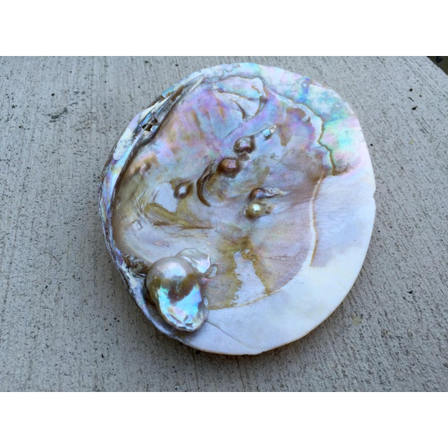 Natural Shell Tray With Baroque Pearl - Image 4 of 11