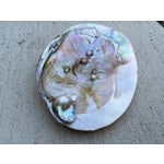 Image of Natural Shell Tray With Baroque Pearl