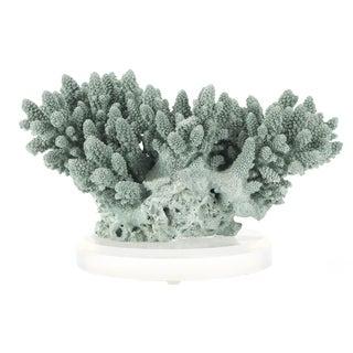Mid-Century Blue Coral Specimen on Lucite