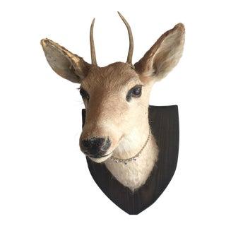 Deer Head Wall Mount