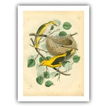Image of Antique Birds & Nest Archival Print
