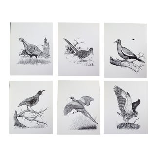 Vintage Dick Calkins Wildbird Sketches - Set of 6