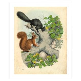 Antique '3 Squirrels' Archival Print