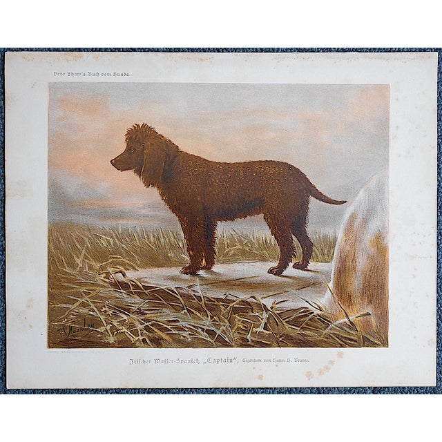 Antique Dog Lithograph - Irish Water Spaniel - Image 3 of 3