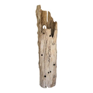 Large Driftwood Tree Trunk Sculpture