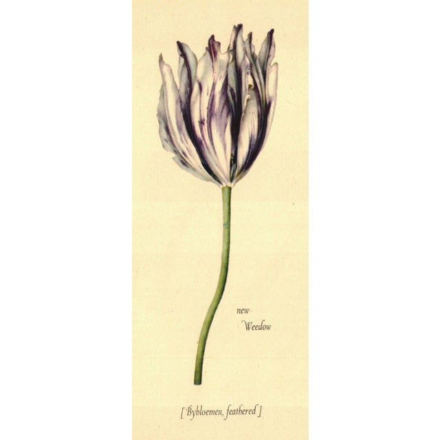 Illustrated Tulipomania - Image 3 of 3