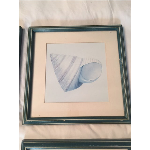 Image of Shell Prints - 6 Prints