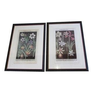 Framed 17th Century Daffodil Botanical Prints - A Pair