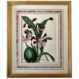 Antique Orchid Botanical Hand Colored Lithograph