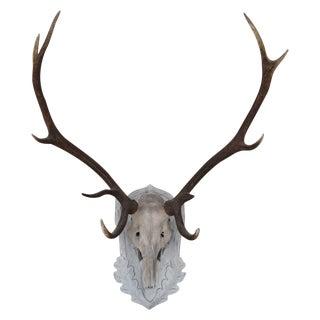 Large Vintage Elk Antlers Mounted on Wooden Plaque